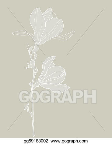 368x470 Magnolia Clipart Stylized ~ Frames ~ Illustrations ~ Hd Images