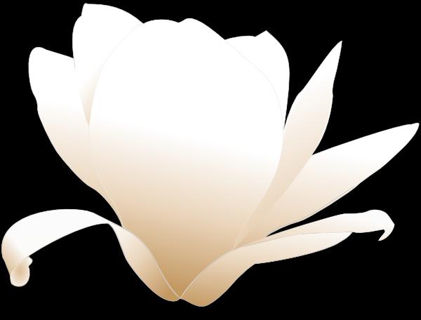 600x456 Magnolia White Clip Art Free Vector 4vector