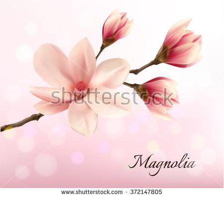 450x398 Pink Magnolia Stock Vectors Amp Vector Clip Art Shutterstock