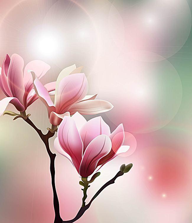 650x758 Vector Fresh Magnolia Background Art, Vector, Textured, Bright