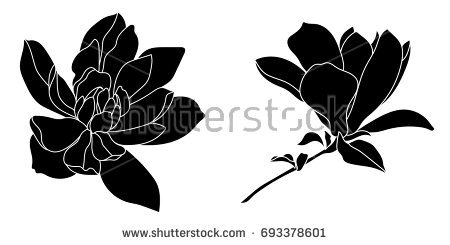 450x245 Collection Of Magnolia Silhouette Download Them And Try To Solve