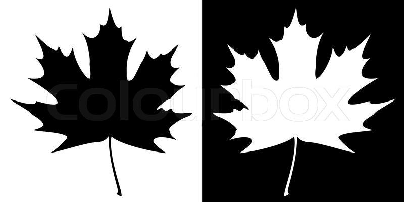 800x400 Double Maple Leaf Silhouette Stock Vector Colourbox