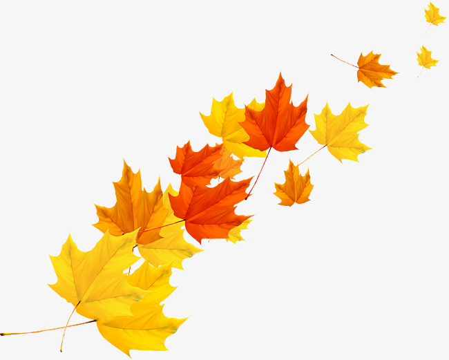 650x521 Maple Leaf Vector Png Images Vectors And Psd Files Free