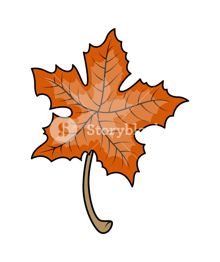 842x1000 Maple Leaf Vector Royalty Free Stock Image
