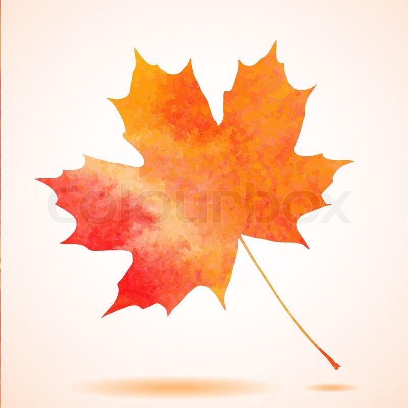 800x799 Orange Watercolor Painted Vector Autumn Maple Leaf Background