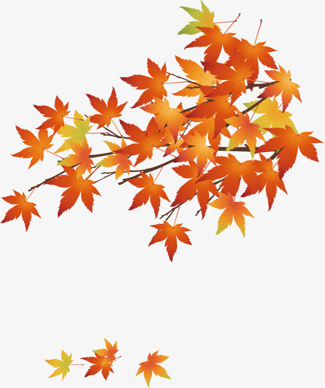 650x775 Vector Autumn Maple Leaf, Leaf Vector, Autumn Maple Leaf, Maple