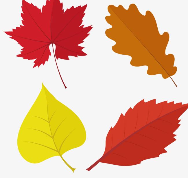 650x615 Dark Autumn Maple Leaves Vector, Deep Color, Autumn, Maple Leaf