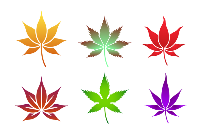 700x490 Japanese Maple Vector