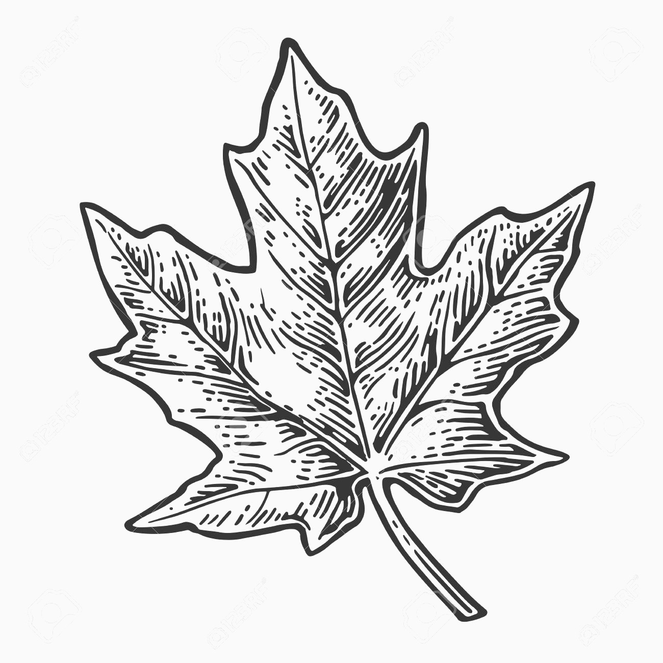 1300x1300 Maple Leaf Vector Luxury Maple Leaf Vector Vintage Engraved
