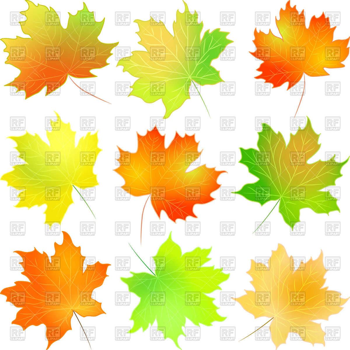 1200x1200 Autumn Red, Green, Yellow And Orange Maple Leaf Vector Image
