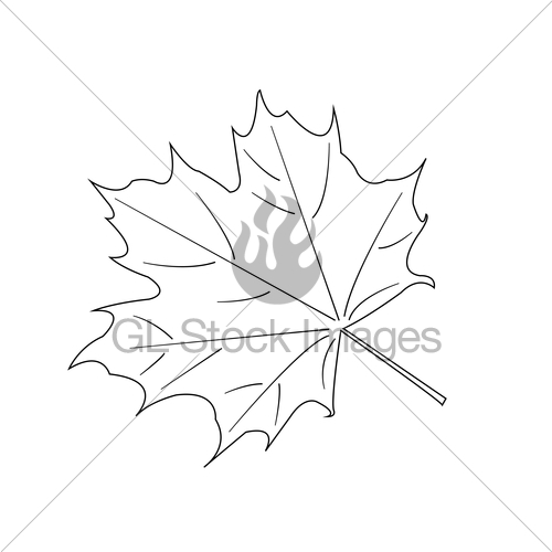 500x500 Maple Leaf. Vector Gl Stock Images