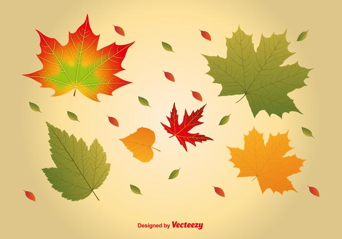 700x490 Realistic Maple Leaves Vectors
