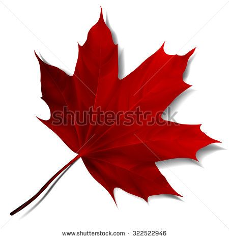 450x470 Realistic Red Maple Leaf Isolated On White Background. Vector