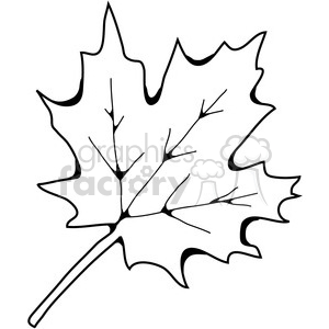 300x300 Royalty Free Sugar Maple Leaf 387458 Vector Clip Art Image