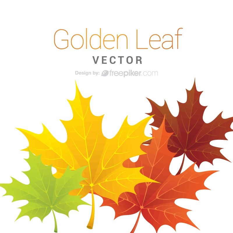 800x800 Freepiker Maple Leaf Vector Design