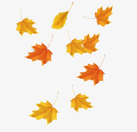 532x512 Maple Leaf, Leaf Vector, Maple Vector Png And Vector For Free Download