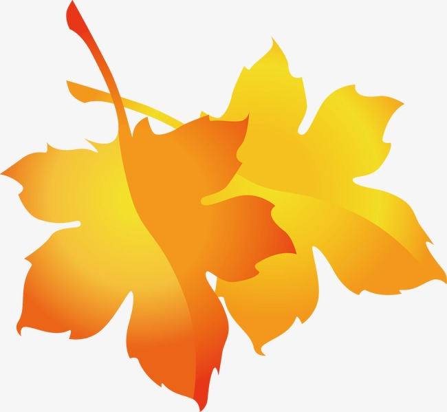 650x599 Maple Leaf Vector, Fall, Akiba, Leaf Png And Vector For Free Download
