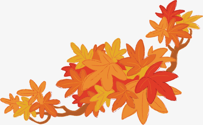 650x403 Maple Leaf Vector, Maple Leaf, Tree, Leaf Png And Vector For Free