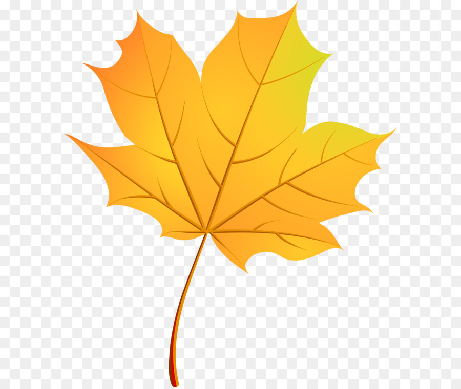 900x760 Autumn Leaves Maple Leaf