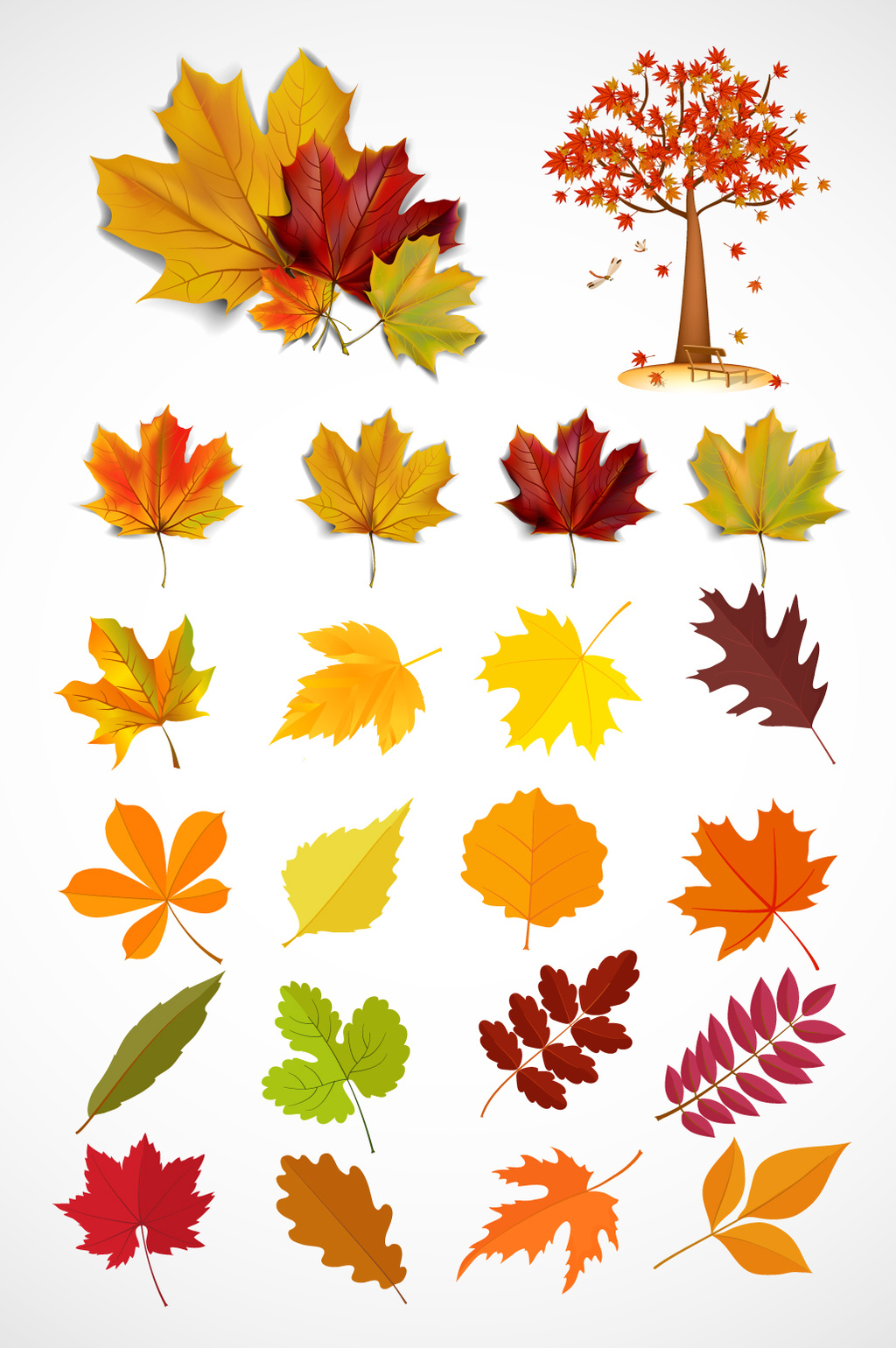1024x1540 Autumn Maple Leaf Vector Material Free Download Pikbest