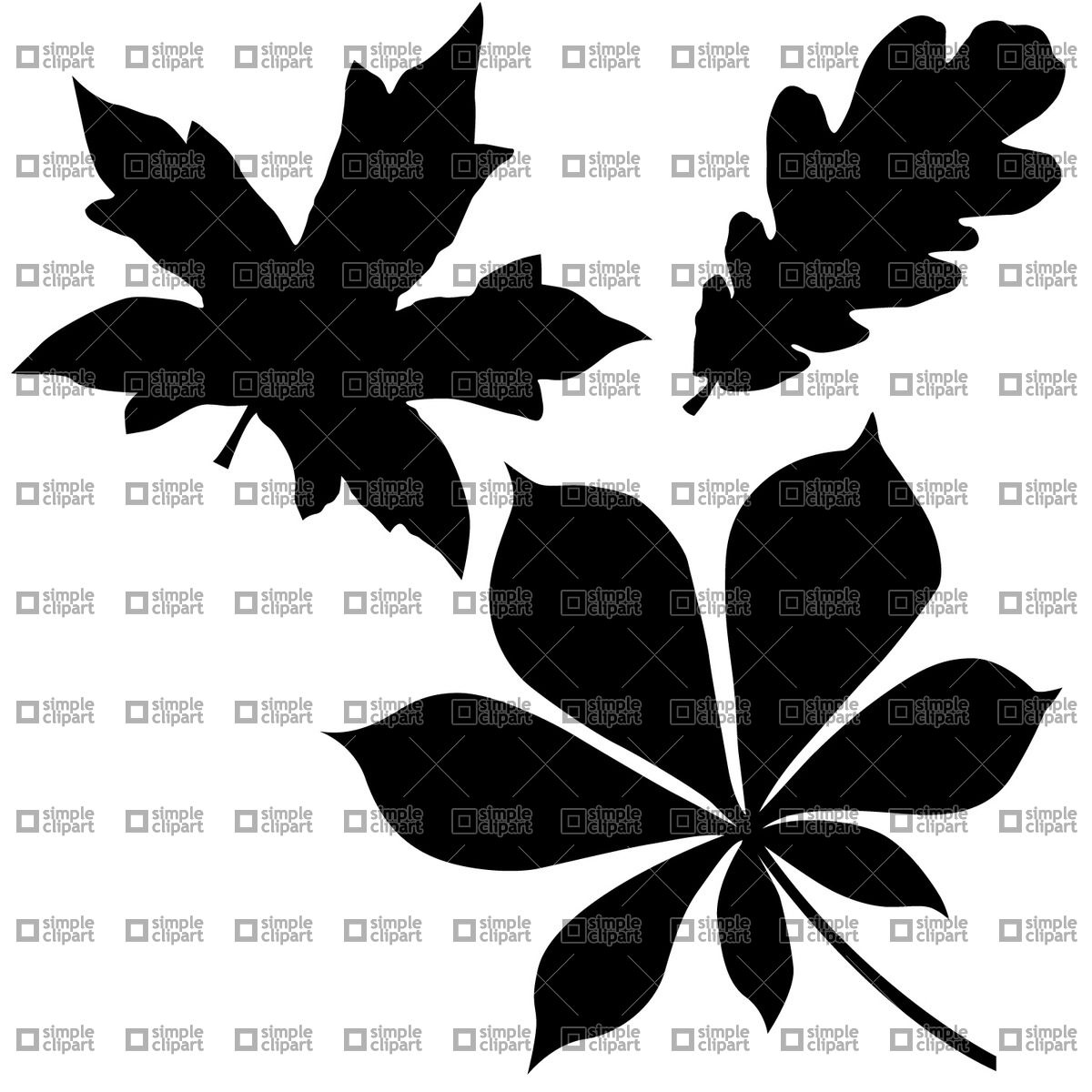 1200x1200 Oak, Chestnut And Maple Leaf Vector Image