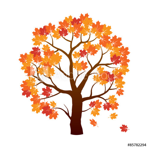 500x500 Color Autumn Maple Tree. Vector Illustration.