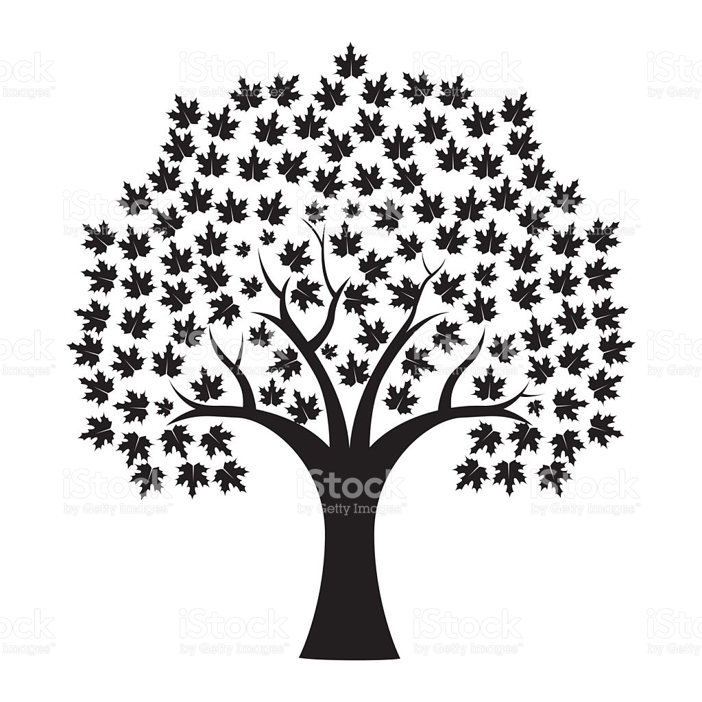 1024x1024 Drawn Branch Maple Tree Free Collection Download And Share Drawn