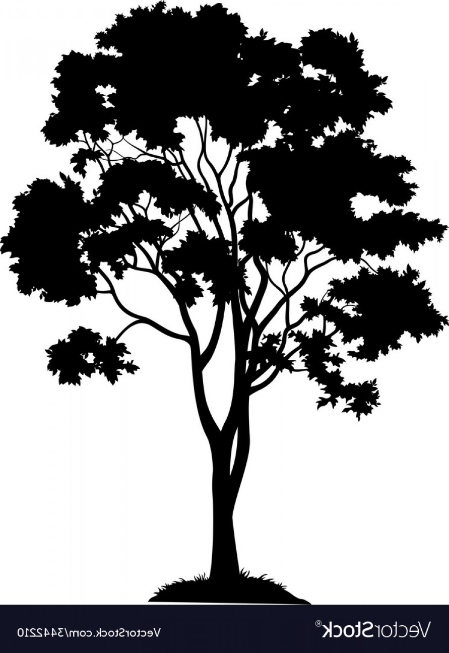 891x1296 Maple Tree And Grass Silhouette Vector Rongholland
