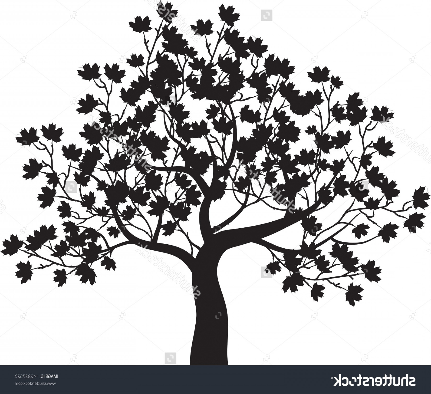 1800x1648 Maple Tree Clipart Black And White Geekchicpro