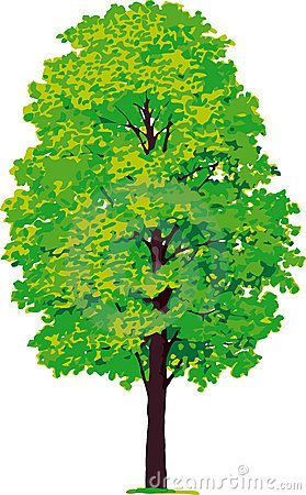 279x450 Maple Tree. Vector Maple And Pine Plant