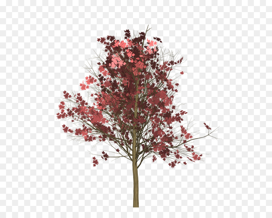 900x720 Red Maple Vector Graphics Image Photograph Clip Art