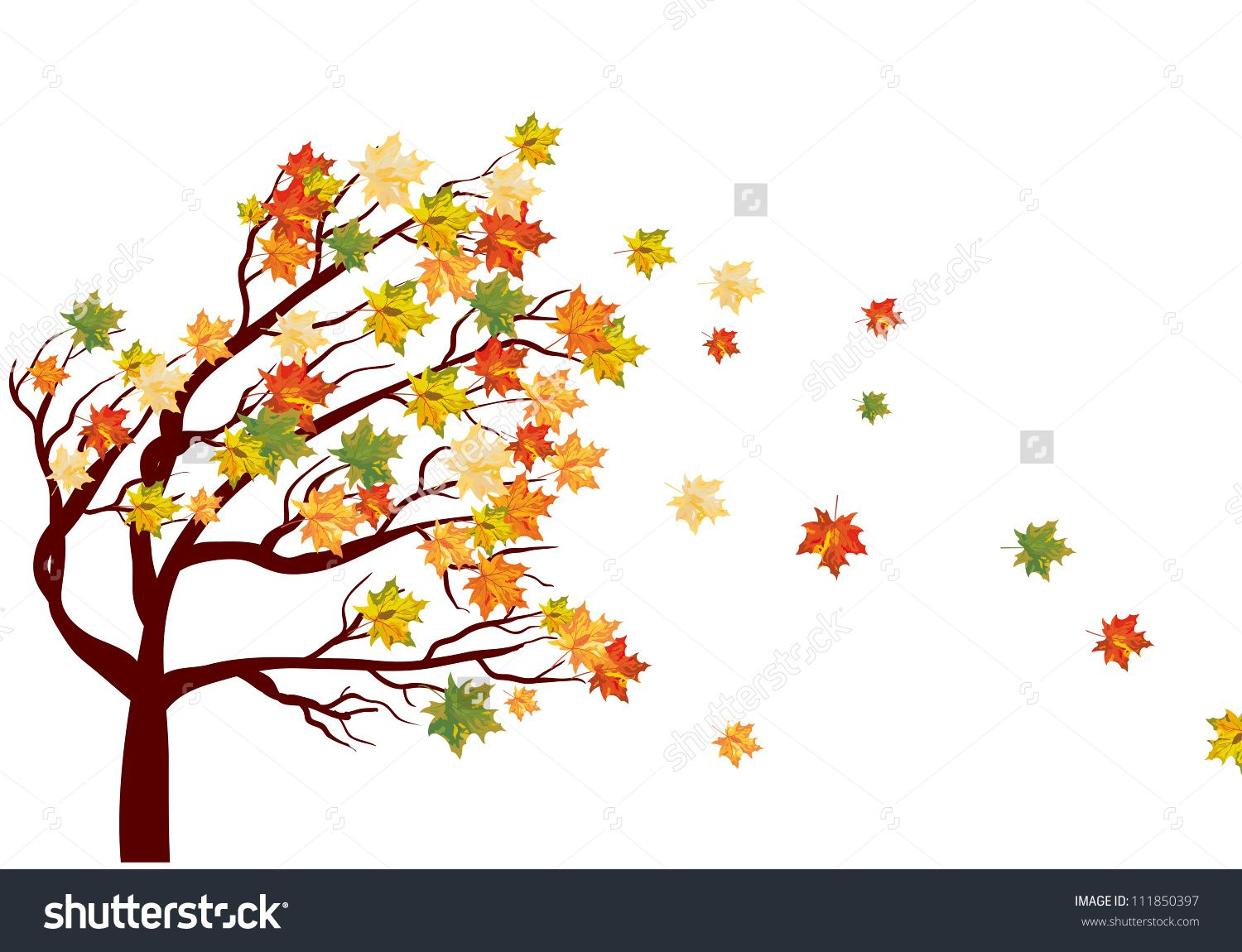 1500x1150 Autumn Maple Tree With Falling Leaves. Vector Illustration