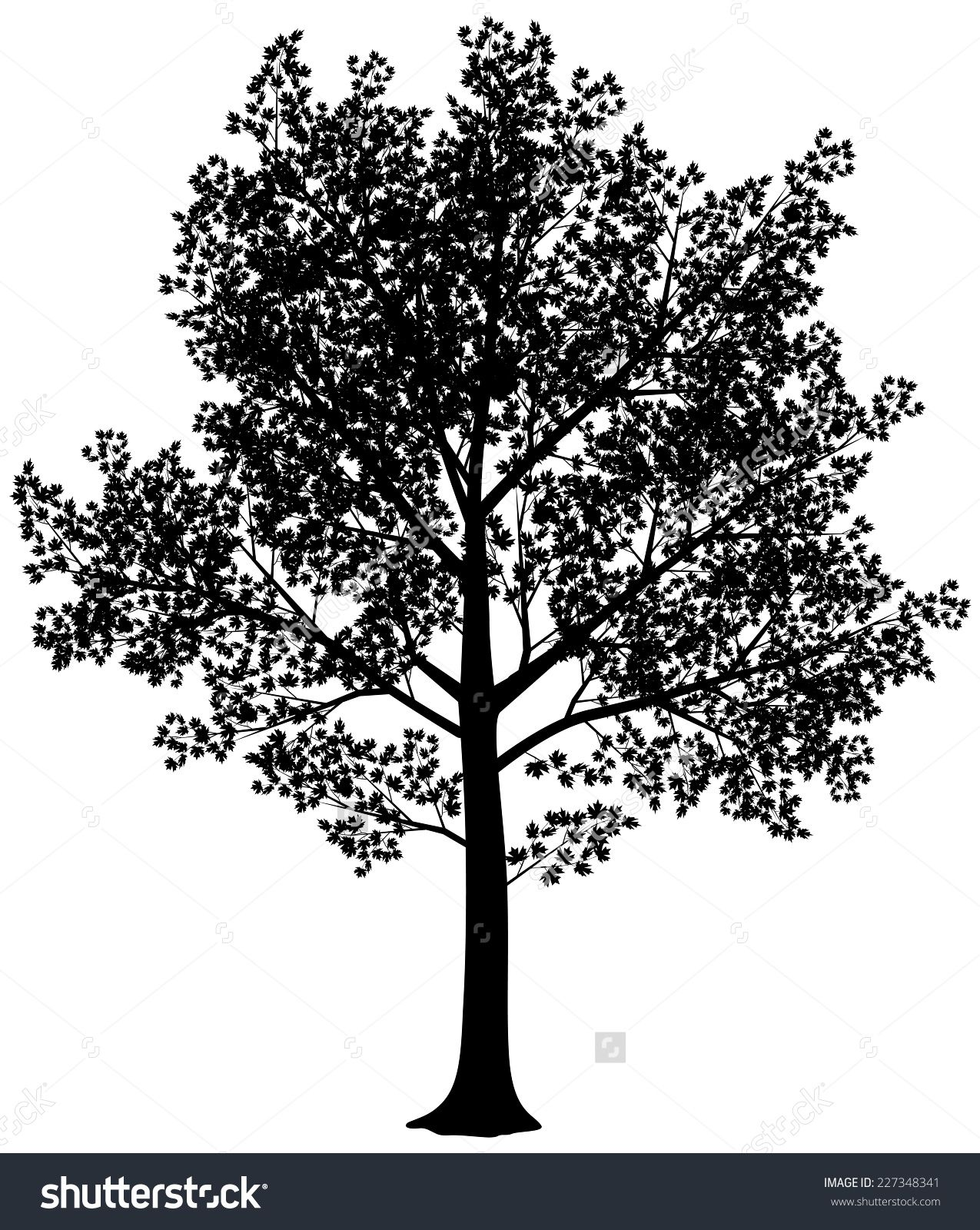 1275x1600 Vector Black And White Maple Silhouette. Vector Illustration. Eps8