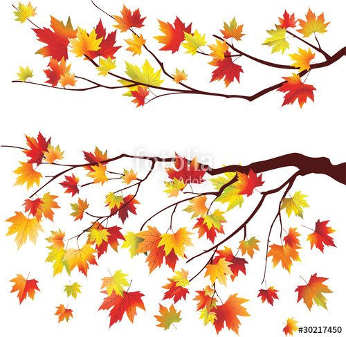 500x487 Autumn Maple Tree Branches Stock Image And Royalty Free Vector