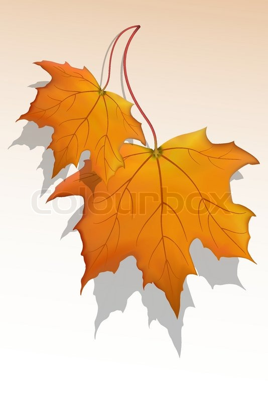 534x800 Illustration Of Vector Maple Leaf Stock Vector Colourbox