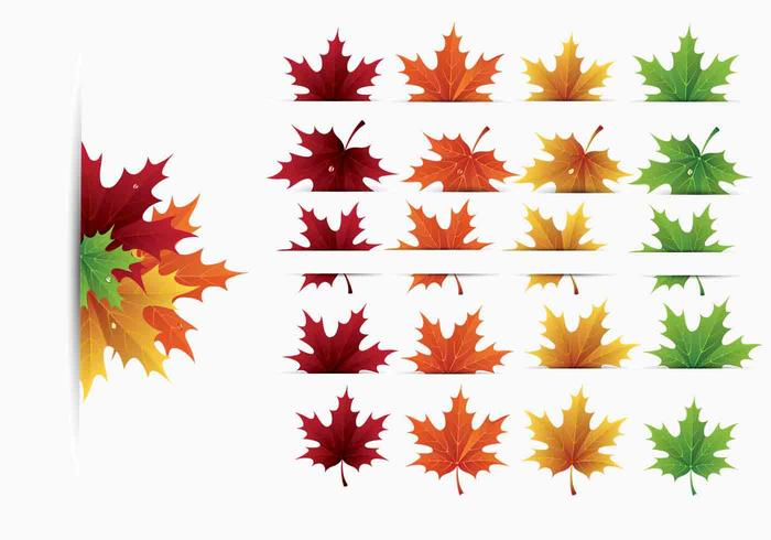 700x490 Maple Leaves Vector Pack