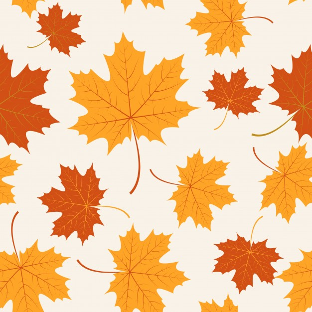 626x626 Maple Vectors, Photos And Psd Files Free Download