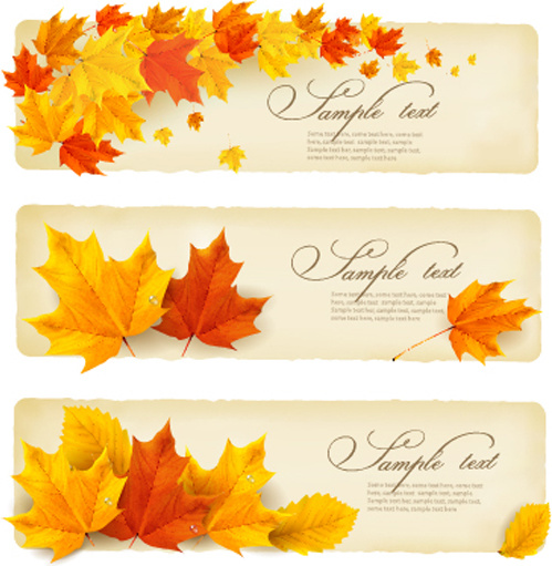 499x511 Maple Leaves Banner Autumn Vector Free Vector In Encapsulated