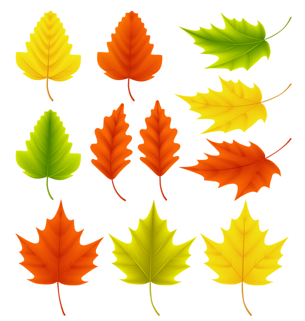 600x630 Maple Leaves With Ginkgo Biloba Vector Free Download