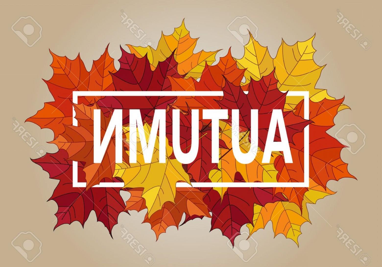 1560x1092 Photostock Vector Autumn Vector Banner Pile Of Leaves Maple Autumn