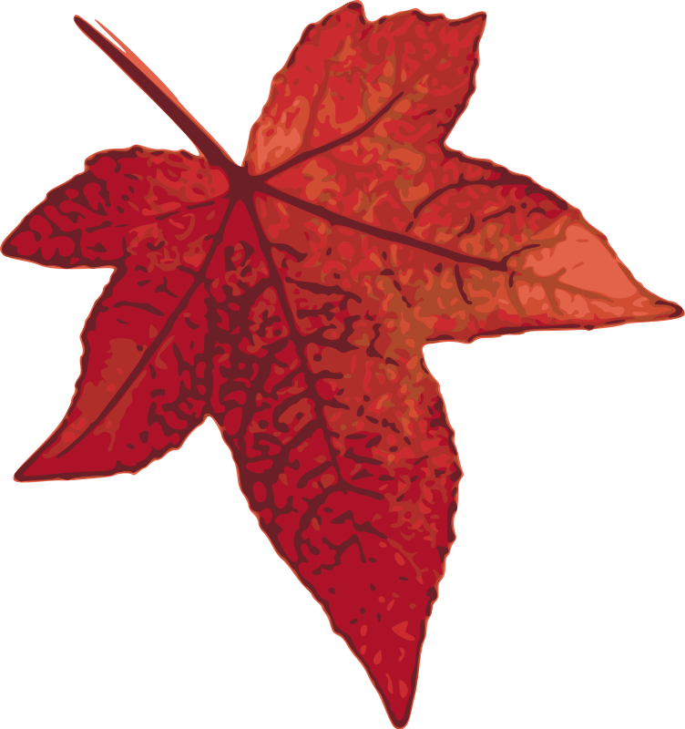 752x800 Red Maple Leaf Free Vector 4vector