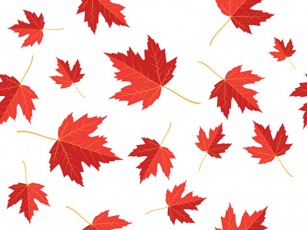 626x469 Red Maple Leaf Vector Seamless Pattern Template Vector Premium