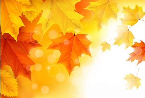 600x405 Sunlit Autumn Maple Leaves Vector Background