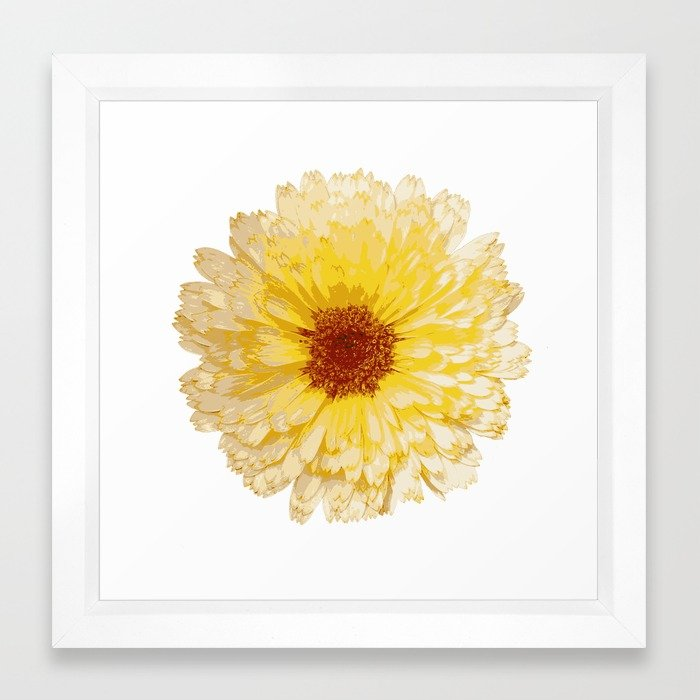 700x700 Beautiful Yellow Marigold Vector Isolated Framed Art Print By