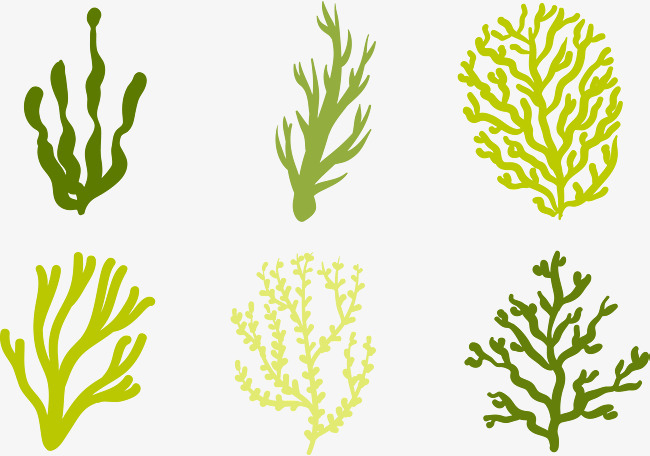 650x456 Marine Seagrass, Ocean Hand Painting, Vector Diagram, Decoration
