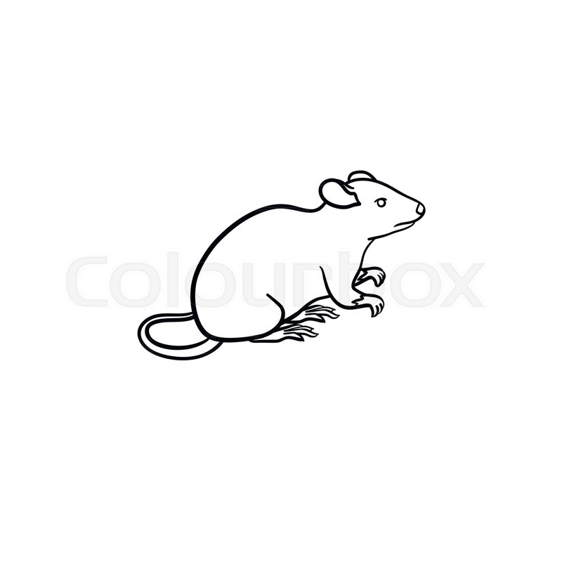 800x800 Lab Rat Hand Drawn Outline Doodle Icon. Mice Vector Sketch