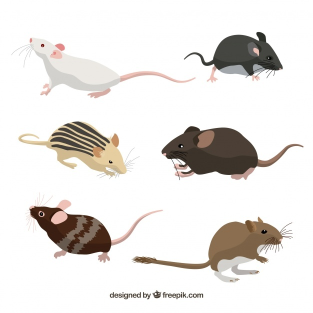 626x626 Mice Vectors, Photos And Psd Files Free Download