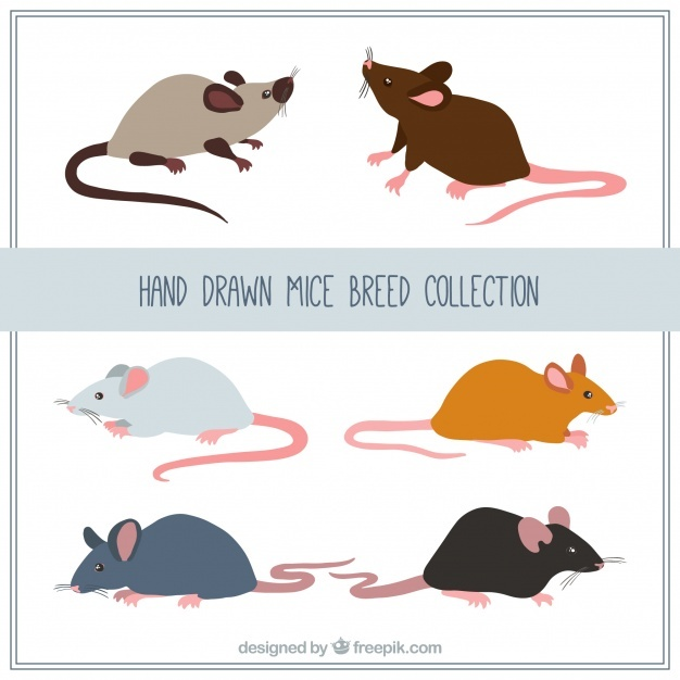 626x626 Mouse Vectors, Photos And Psd Files Free Download