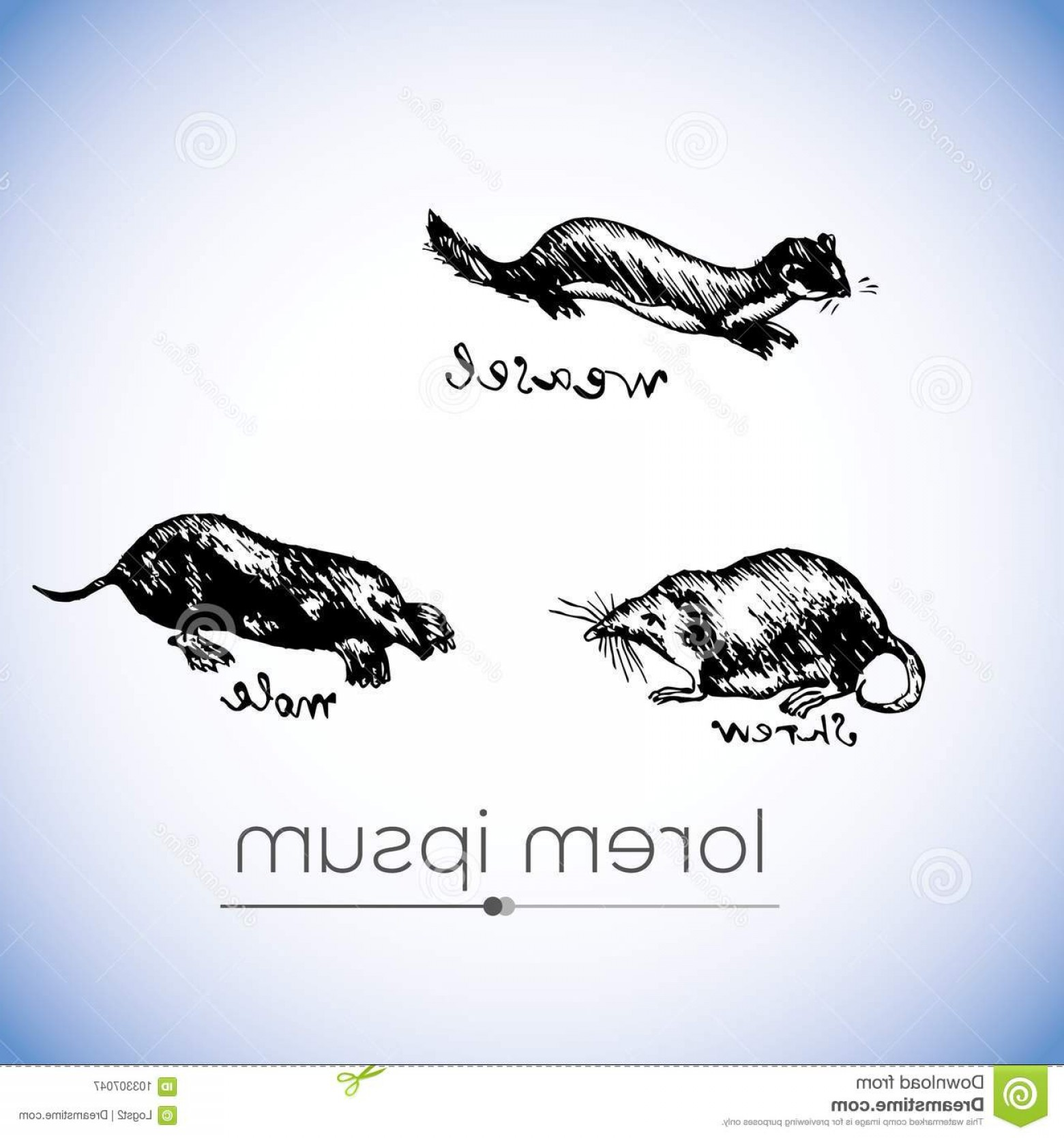 1560x1668 Weasel Shrew Mole Vector Hand Drawn Illustration Weasel Shrew Mole
