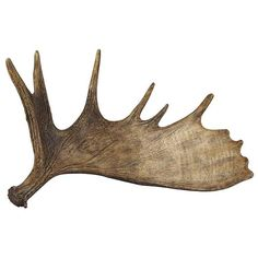 236x236 Collection Of Moose Antler Drawing High Quality, Free